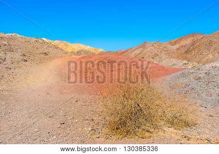 The dry thorn on the red in the desert of Eilat mountains Israel.