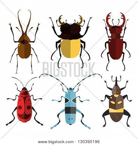 Vector illustration of bugs. Isolated on a white background. Beetle flat icons. Insect set.