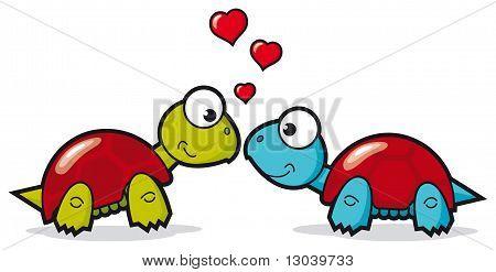 Turtle lovers