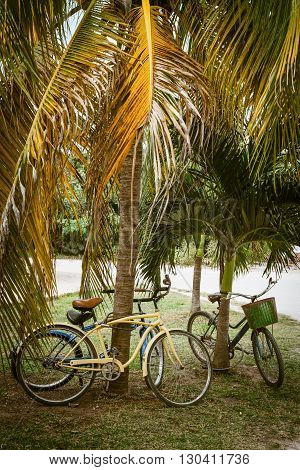 Tourist bicycles parked in palm tree on summer time. Think green transport concept eco friendly tourism healthy sustainable lifestyle.