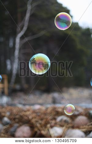 Rainbow soap bubbles on the background of gloomy cold forest landscape.