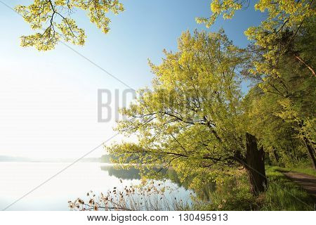 Spring landscape at dawn. Beginning of May, Poland