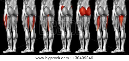 Concept or conceptual 3D human upper leg anatomy or anatomical and muscle set or collection isolated on black background