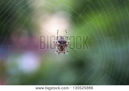 Spider on the web over green background close up