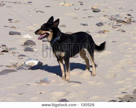 Katie The Dog