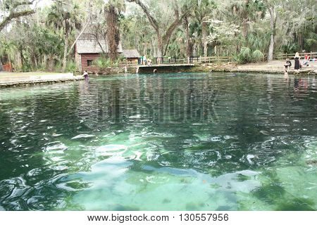 a picture of a freshwater spring flowing