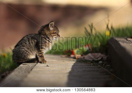 Alone cute little street cat in the park