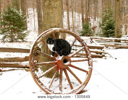 black and white cat sitting on an old wooden wagon wheel in a snow covered wooded area poster