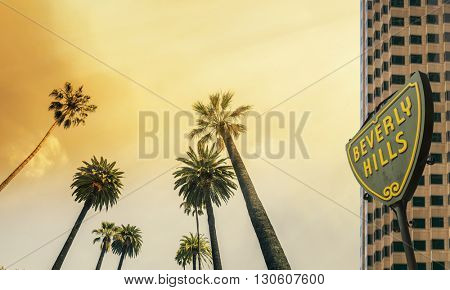 Los Angeles, Beverly Hill,  West Coast Palm Tree Sunshine