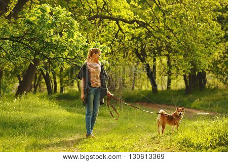 Shiba Inu dog and girl walking in the spring forest. Walking with a pet. Pedigree dog. Dog walking.