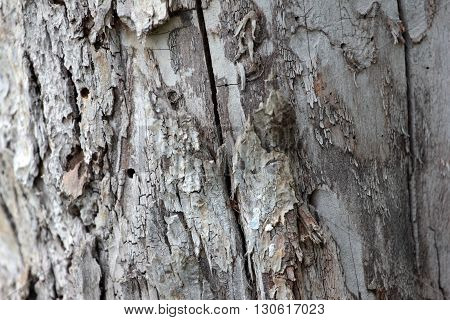 the texture of the bark of an old tree