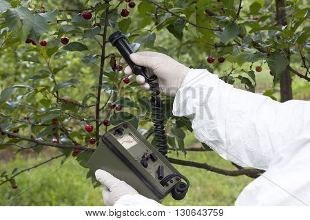 Measuring radiation levels of cherry in the orchard
