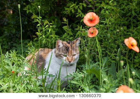Cat relaxing in the garden with nature background.