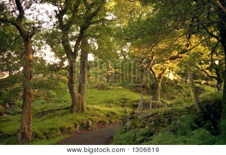 Photo Of Wales Country Scene, Dusk