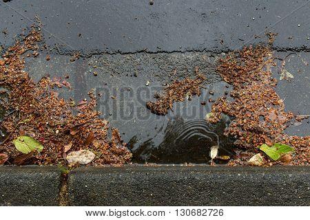 Plant debris clogging a drain during a rain storm