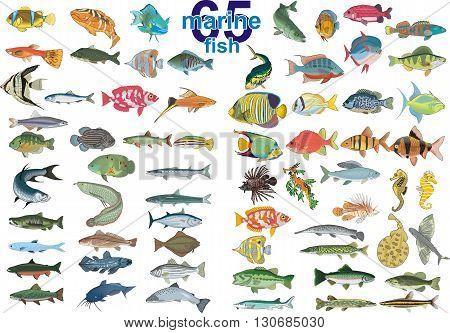 Set - 65 marine fish. Vector illustration on a transparent background