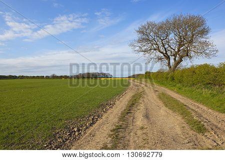 Farm Track And Ash Tree