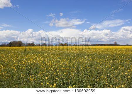 Springtime Agricultural Landscape