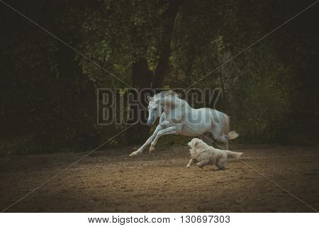 white horse runs with the dog on the dark green trees background
