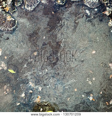 Many Birch Pollen On Surface Of Puddle In Spring