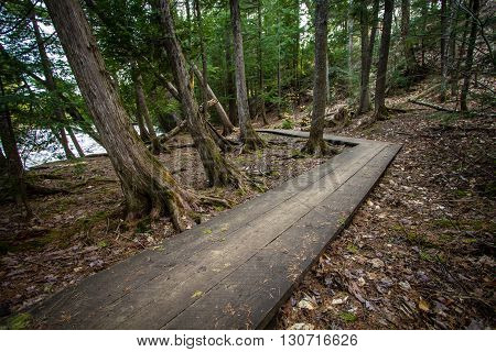 Crooked Boardwalk Path In The Woods. Winding wooden boardwalk through a cedar forest with trees leaning towards the river. Tahquamenon Falls State Park.