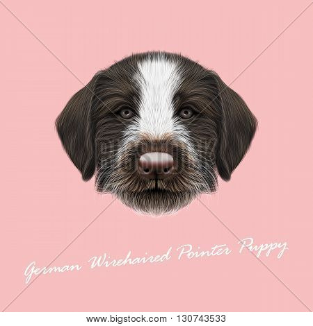 Vector Illustrated Portrait of German Wirehaired Pointer puppy. Cute brown face of hunting dog on pink background.
