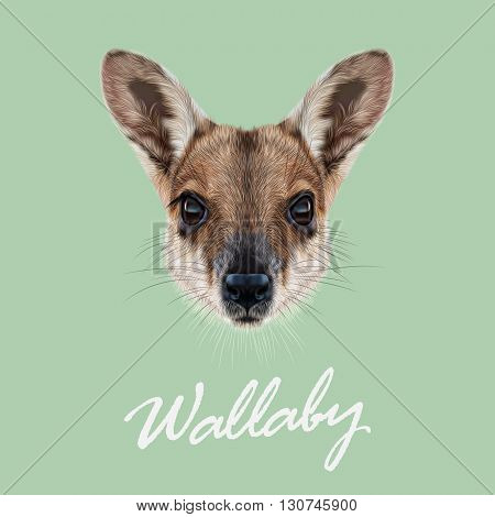 Vector Illustrated Portrait of Wallaby. Cute face of wild Australian mammal Wallaby on green background.