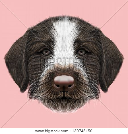 Illustrated Portrait of German Wirehaired Pointer puppy. Cute brown face of hunting dog on pink background.