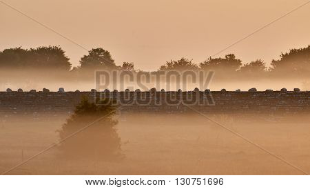 Stone wall KarlXgustavs Mur from 1865 early morning light Isle if Oeland province Kalmar Sweden