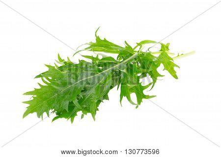 Mizuna Greens On White Background