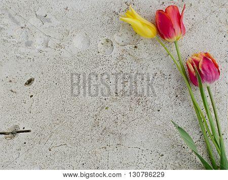Flowers On A Stone Slab