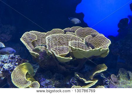 beautiful tropical coral reef close up view