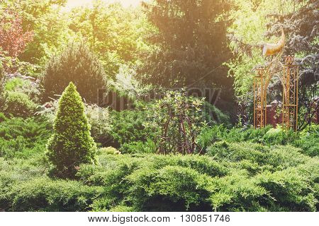Beautiful landscape design, evergreen trees and shrubs in sunlight. Modern landscaping: Fir trees, spruces, arborvitae, thuja, metal arch, evergreen shrubs abd bushes. Summer garden or park design.