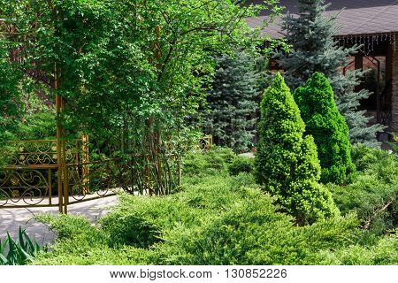 Beautiful landscape design, evergreen trees and shrubs in sunlight. Modern landscaping: Fir trees, blue spruces, arborvitae, thuja, metal fence, shrubs abd bushes. Summer garden or park design.