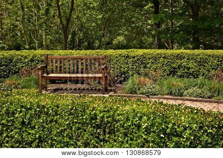 A wooden park bench surrounded by tree bushes and various greenery.