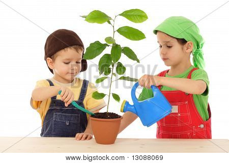 Little children caring for plant
