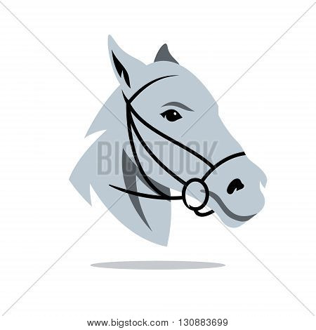 White bridle gelding in isolated on white background