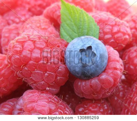 Blue-berry standing out on background of red raspberries and blueberry leaf.