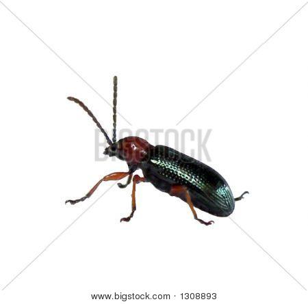 Bug_Green