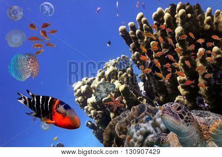 Coral Reef and Tropical Fish iin the Red Sea Egypt