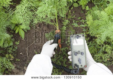 Measuring radiation levels of carrot in the garden