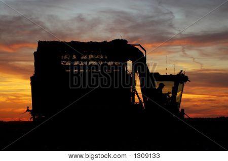 Sunset Cotton Harvest