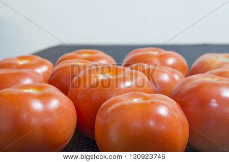 many red healthy organic tomato in rows
