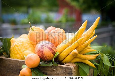 Heap of different citrus fruits in basket closeup with lemon orange tangerine and buddha's hand