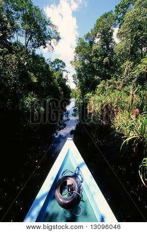 The Forest River Of Borneo Island.