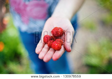 Appetizing fresh strawberries closeup. Woman holding strawberry in hand