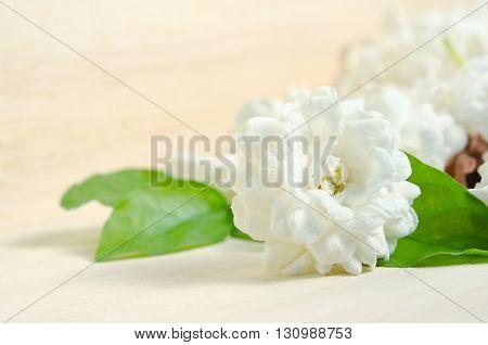 Jasmine (Other names are Jasminum Melati Jessamine Oleaceae) flowers grouped on wooden board background
