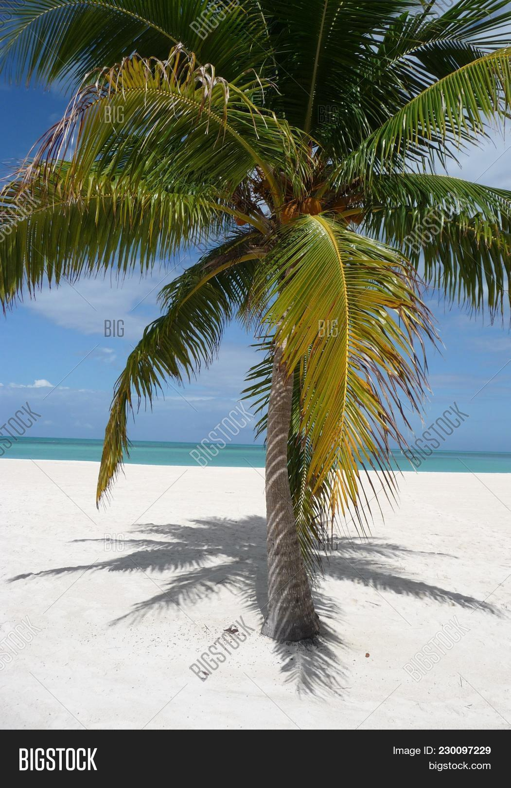 Isla Pasion Beautiful Palm Tree Beach In The Nature Reserve Pion Island Next To Cozumel