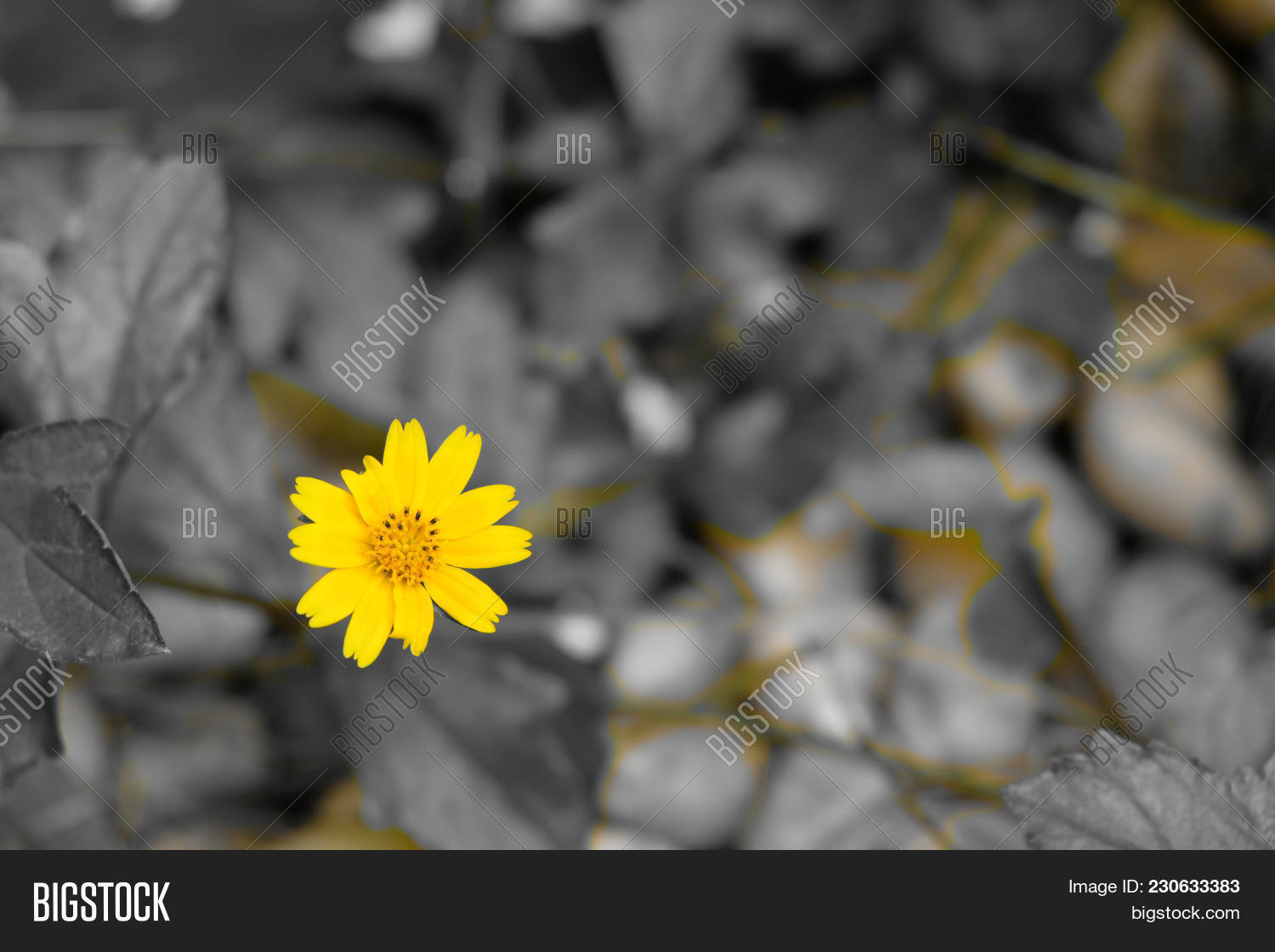 Yellow Flower By Image Photo Free Trial Bigstock