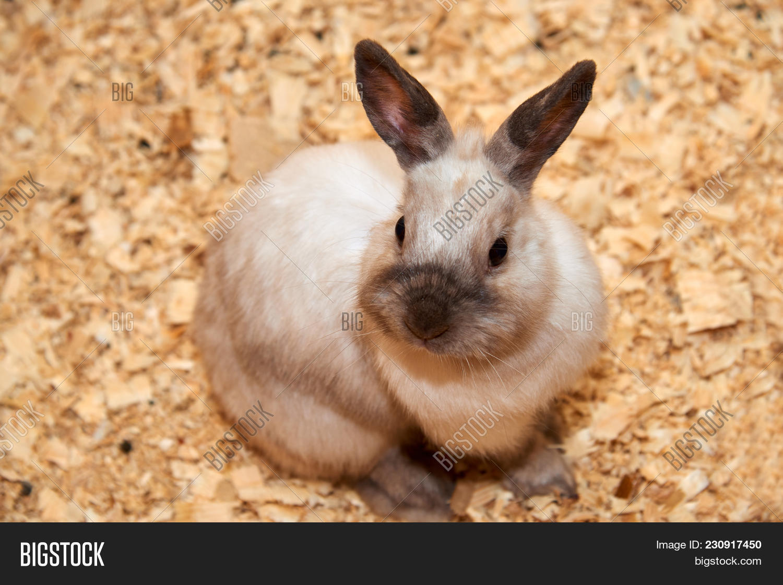 Domestic Rabbit Image & Photo (Free Trial) | Bigstock